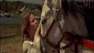 Virginias run - wild horses