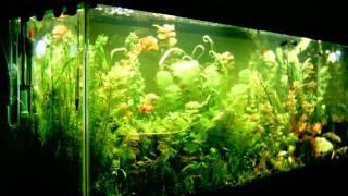 3 week growth planted aquarium time lapse