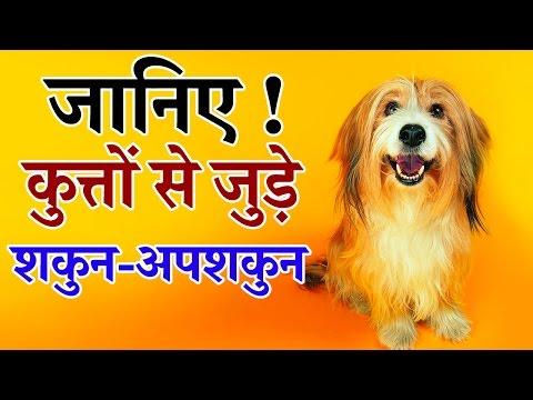 जानिए कुत्तों से जुड़े शकुन अपशकुन || dogs se jude sakun-upsakun