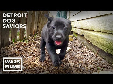 This Stray Dog Acting Weird Saves Puppies & Injured Mama After Owner Dies Ep 2 Detroit Dog Saviors