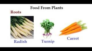Kids Living Science - Food From Plants