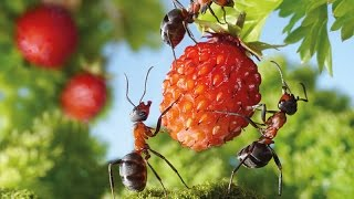 Top Funny Ant Videos Compilation - The Power of Teamwork