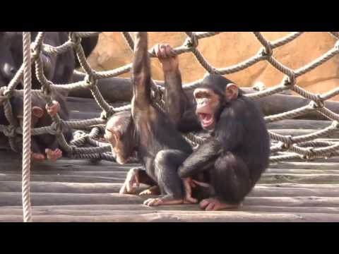 Gay Monkeys Zoo Lisboa