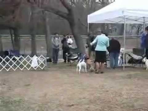 Xxx Mp4 Dog Show Match Anne Arundel K C 3 30 08 3gp Sex