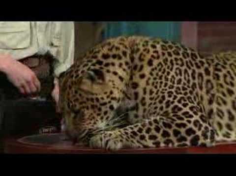Dave Letterman Jungle Jack Hanna