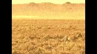 Vangelis - Splendeur Sauvage (Nature's Splendeur)
