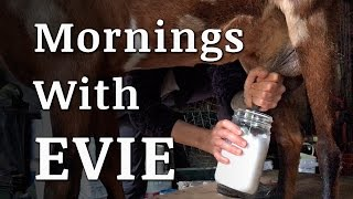 A Morning Milking a Goat