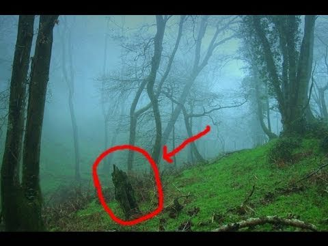 OMG Bigfoot Caught on Tape