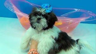 Lola Cachorrinha da tia Cris - 4 episódios muito fofinhos:casinha, banho, chegada e bolo #EuamoaLola