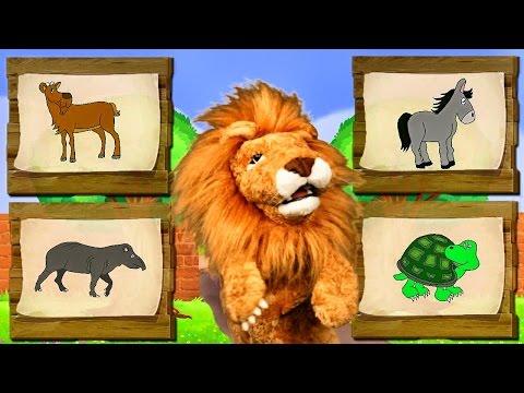 Canciones Infantiles del Zoo El León Lorenzoo nos presenta a los animales Videos Educativos