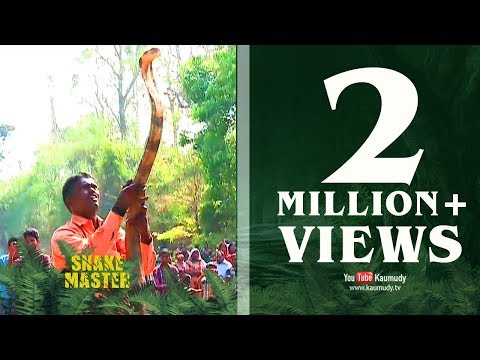 Vava Suresh caught a long King Cobra from a tree | SNAKE MASTER - EPISODE-39 - KAUMUDY TV