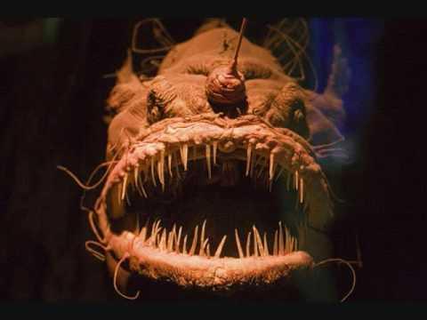 creepy deep sea fish