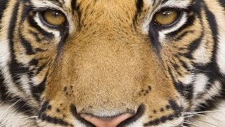 THE AMAZING BEAUTY OF THE PLANET EARTH [FULL HD] 2015