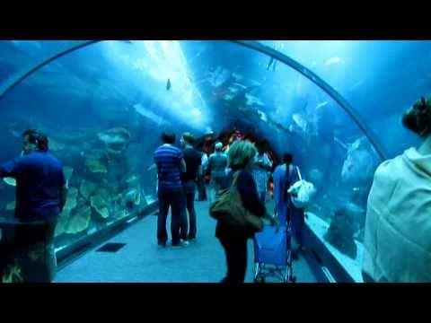 Xxx Mp4 Dubai Mall Aquarium 3gp Sex