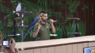 Funny parrot show 2016