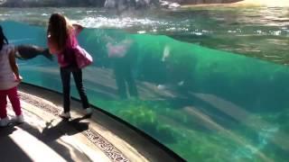 Sea Lion reacts when little girl falls