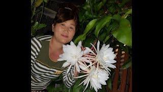 Hmoob Qhia tshuaj ntsuab: King flowers zoo Tshuaj heev -by Niam nraj xeeb Lis 8/24/17