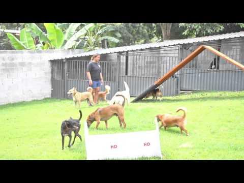 Acãopamento Hospedagem Livre Para Cães