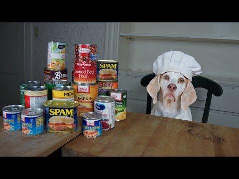 Chef Dog Makes Canned Food Casserole Funny Dog Maymo