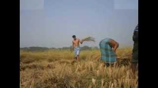 bangla music 1815lokman3