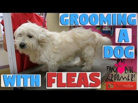 Xxx Mp4 Grooming A Dog With Fleas 3gp Sex