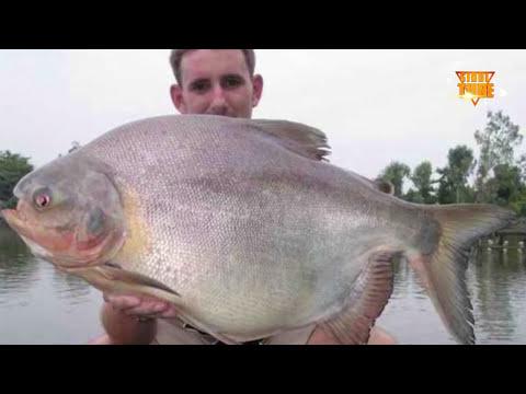INILAH 10 MONSTER MENGERIKAN PENGUASA SUNGAI AMAZON