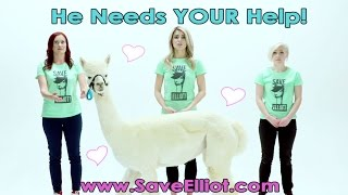HELP OUR ALPACA FRIENDS! #Dirty30Movie