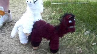 Puppet Horse Sex