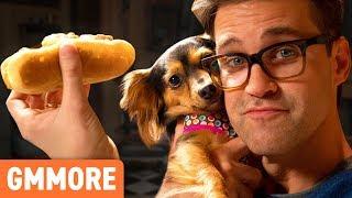 Hot Dogs for Dogs Taste Test
