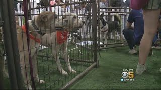 Pets Orphaned By CA Wildfires Up For Adoption At Alameda County Fairgrounds