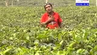 Sylhet Region Folk Song By Abdul Amin   Ami Baandhu hare Shathi