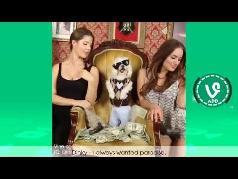 Funny pet video 21 cute pet and sexy girl 2017 Ha ha ahhhh
