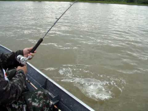 pescaria no rio paraguai barco hotel Bailonia