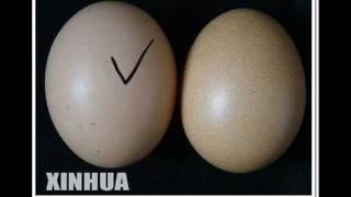 تخم مرغ چينى    china fake egg