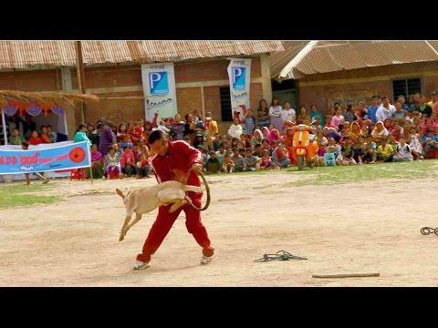 Dog show at Yaoshang Sports Festival Sports Hints
