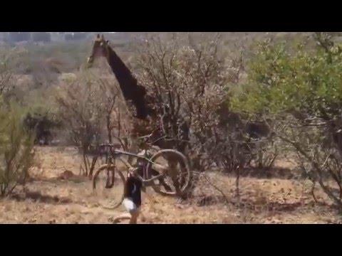 Agresión animal 13 - Ataque de animales en vivo