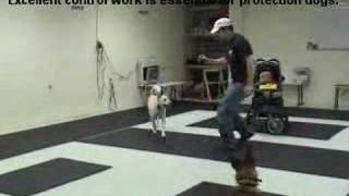 Guard dog Attack training German Shepherd/Malinois k9-1.com