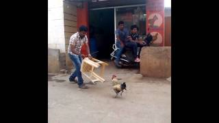 Funny video cock fight with men