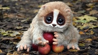 8 Cute Animals That Can Kill You