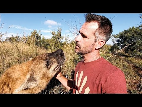 Meet the characters Bongo King of the Hyenas The Lion Whisperer
