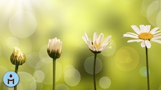 Music Relax Nature | Mindfulness Music, Zen Relaxing Music Playlist, Stress Relief, Meditation ❣801