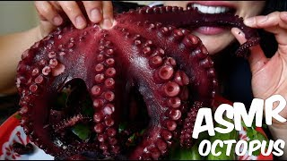 ASMR GIANT OCTOPUS ปลาหมึกยักษ์ (CHEWY EATING SOUNDS) No Talking | SAS-ASMR