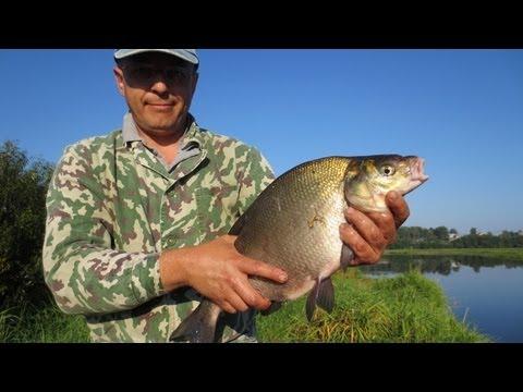 рыбалка на дону на фидер в августе видео