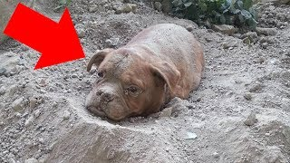 A Man Walking His Dog Finds Something Buried In The Ground. You Won't Believe What He Dug Up!