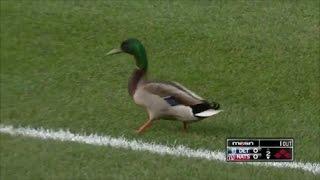 MLB Animals on the Field