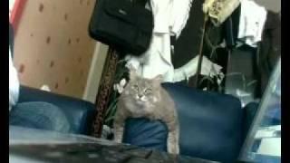 A Muslim Cat [Amazing]