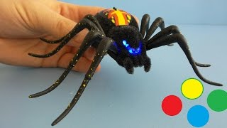 Unboxing Toy Spider from Live Pets