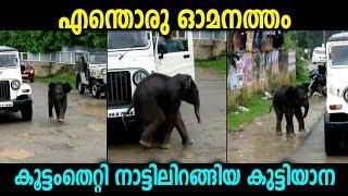 കൂട്ടംതെറ്റി നാട്ടിലിറങ്ങിയ കുട്ടിയാനയുടെ കളികൾ കാണു...മൂന്നാർ, ചിന്നക്കനാലിൽ | Malayalam News