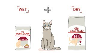 Royal Canin Mix Feeding for Cat