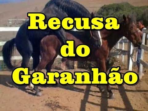 Recusa do Garanhão Turbante JO horsetv .br